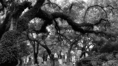 Photograph - Live Oak At The Old Burying Ground by Debby Richards