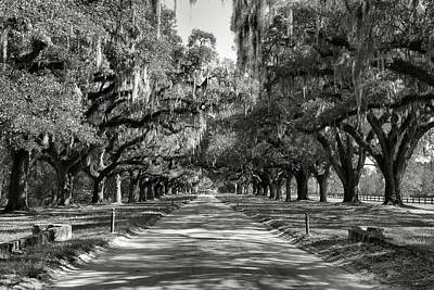 Live Oak Avenue II Art Print by Steven Ainsworth