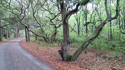 Photograph - Live Oak Forest by Liza Eckardt