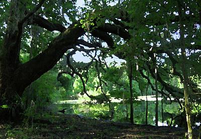 Live Oak Hidden Pond Art Print by Marnie Hutcheson
