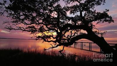 Photograph - Live Oak Landing Sunrise by Benanne Stiens