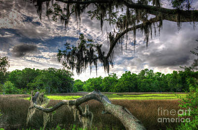 Live Oak Marsh View Art Print
