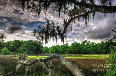 Live Oak Marsh View Art Print