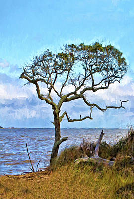 Photograph - Live Oak On Winyah Bay by Sandra Anderson