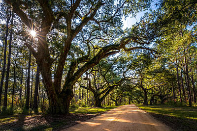 Photograph - Live Oak Path by Serge Skiba