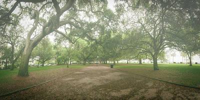 Photograph - Live Oak Promenade by Rob Travis