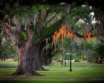 Photograph - Live Oak Sunset by Ray Devlin