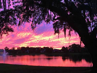 Photograph - Live Oak Sunset by Rick Locke