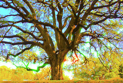 Photograph - Live Oak by Susan Crossman Buscho