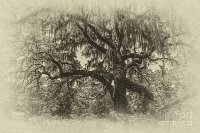 Photograph - Live Oak Tree Antique Plate by Dale Powell
