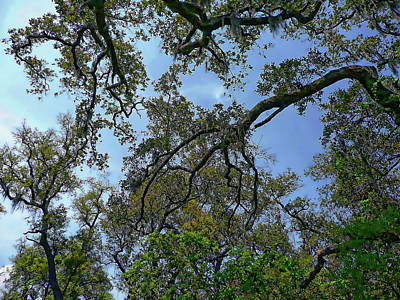 Photograph - Live Oak Trees by Anthony Dezenzio