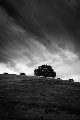 Photograph - Live Oak Under Stormclouds 1 by Alexander Kunz