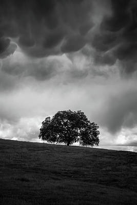 Photograph - Live Oak Under Stormclouds by Alexander Kunz