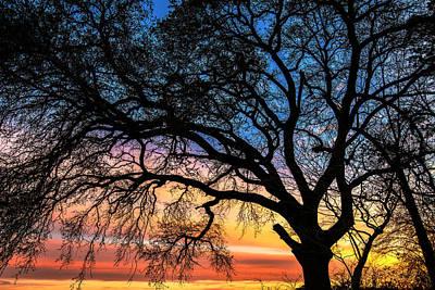 Photograph - Live Oak Under A Rainbow Sky by John Harding