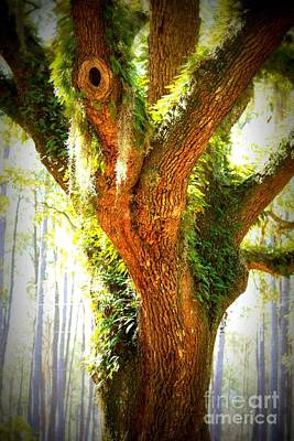 Live Oak With Cypress Beyond Art Print by Carol Groenen