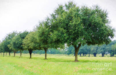 Photograph - Live Oaks At Manresa House Of Retreats - Convent La by Kathleen K Parker