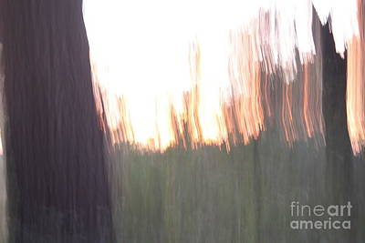 Photograph - Live Oaks At Twilight by Brian Boyle