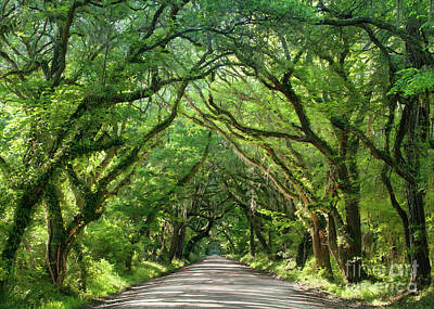 Photograph - Live Oaks IIi by Sharon Foster