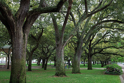 Photograph - Live Oaks In Charleston by Jill Lang
