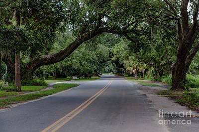 Photograph - Live Oaks In Mcclellanville by Dale Powell