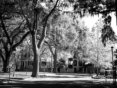 Photograph - Live Oaks In The Neighborhood by John Rizzuto