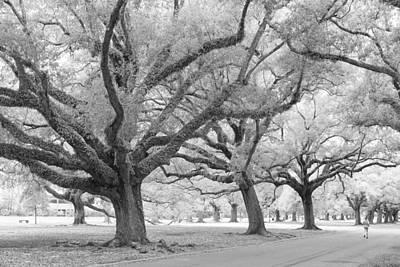 Photograph - Live Oaks by Scott Rackers