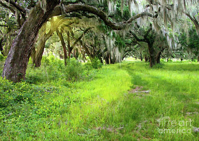 Photograph - Live Oaks Sunset by Sharon Foster