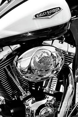 Photograph - Live To Ride Harley by Tim Gainey