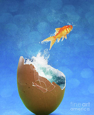 Goldfish Photograph - Live Your Dreams by Juli Scalzi