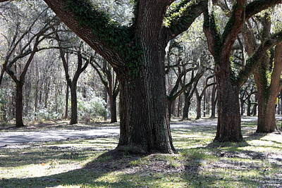 Photograph - Lively Live Oaks by Carol Groenen