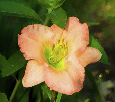 Photograph - Lively Peach by Kathy Clark