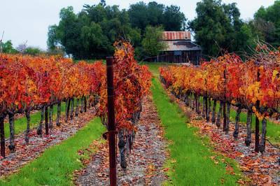 Vineyard Digital Art - Livermore Vineyard by Terry Davis