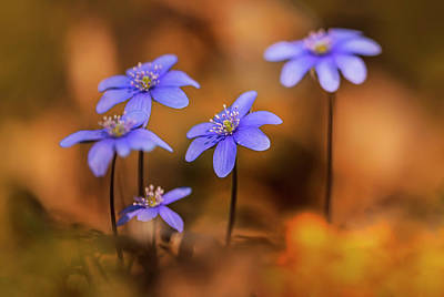 Photograph - Liverworts At Sunset by Jaroslaw Blaminsky