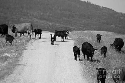 Photograph - Livestock At Large by Ann E Robson