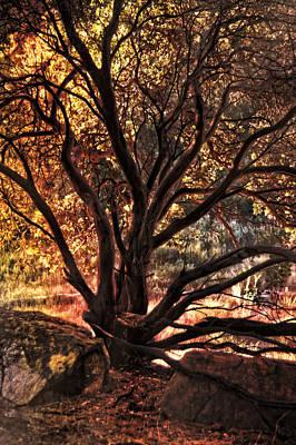 Photograph - Living Color by Leda Robertson