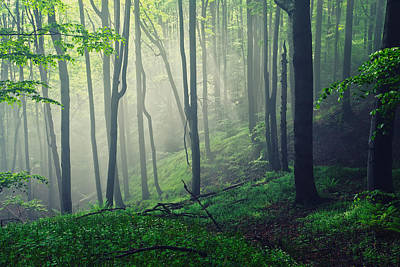Living Forest Art Print by Evgeni Dinev