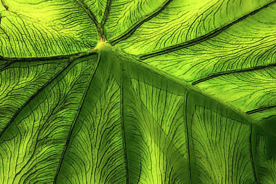 Photograph - Living Green by Barbara  White