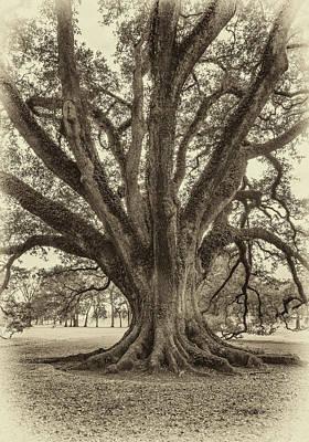 Oak Alley Plantation Photograph - Living History Sepia by Steve Harrington