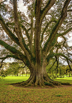 Oak Alley Plantation Photograph - Living History by Steve Harrington