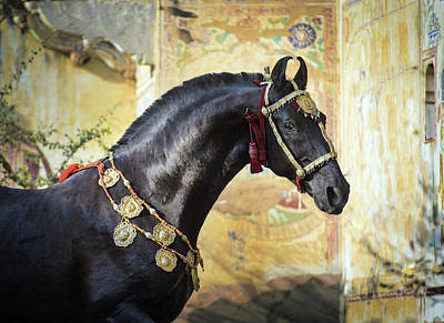 Photograph - Living Piece Of Art. Marwari Stallion by Ekaterina Druz