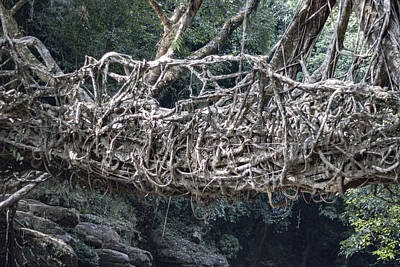 Photograph - Living Root Bridge  by Ramabhadran Thirupattur