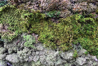 Moody Trees - Living Wall Part Four by Michelle Calkins