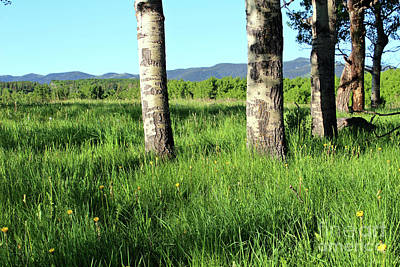 Photograph - Livingstone Range Morning by Ann E Robson