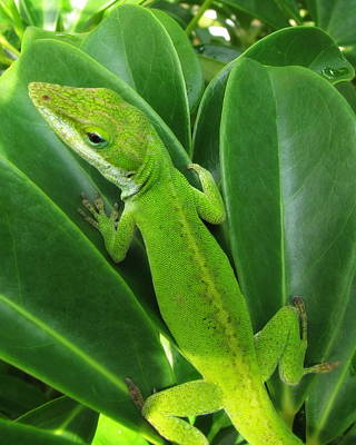 Photograph - Lizard by Beth Vincent