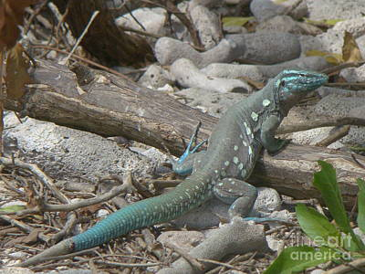 Wall Art - Photograph - Lizard by Cybele Chaves