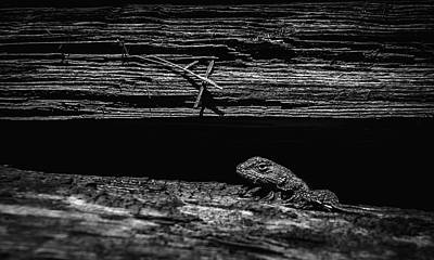 Photograph - Lizard In Woodpile by Rick Mosher