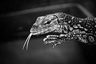 Photograph - Lizard by Jim Gillen