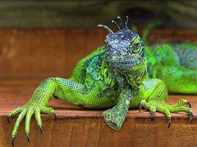 Fantasy Digital Art - Lizard by Maye Loeser