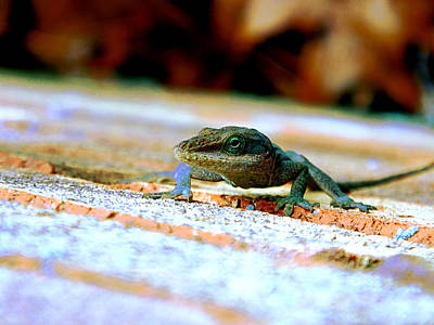 Outsider Art Photograph - Lizard On A Brick Wall by Jake Marvin