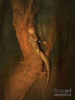 Photograph - Lizard On A Tree Trunk by Elaine Teague